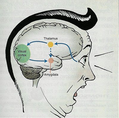 a review of the role of amygdala in emotional memory The roles of the amygdala and the hippocampus in work to overlap emotion and memory between the amygdala and the hippocampus.