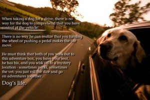 A Dogs Life Perspective