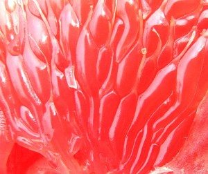 Detailed Grapefruit Anatomy