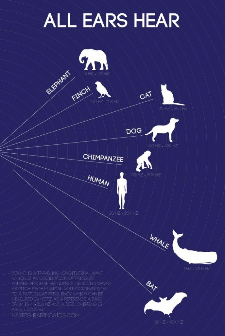 Mammal Hearing Range Infographic