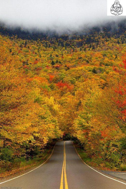 Autumn Leaves Change Colour