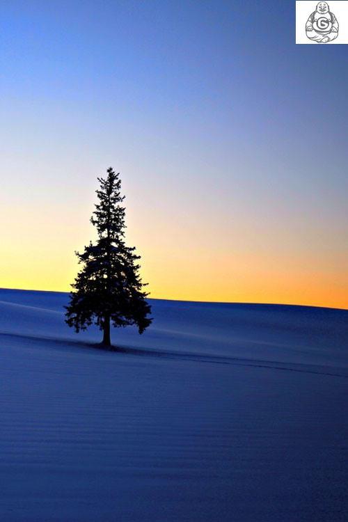 Beautiful Tree On Mountain