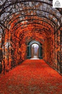Autumn leave path