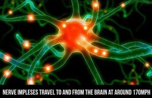 Neuron Speed