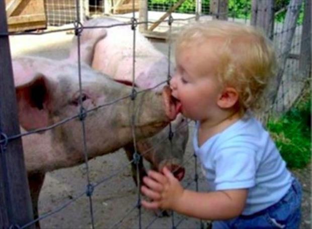 Pig Kisses