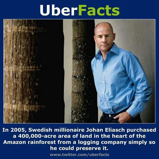 Save the rain forest by buying it