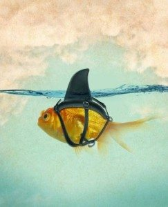 funny shark fish