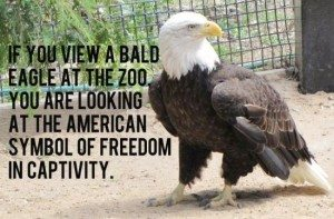 american zoo animals