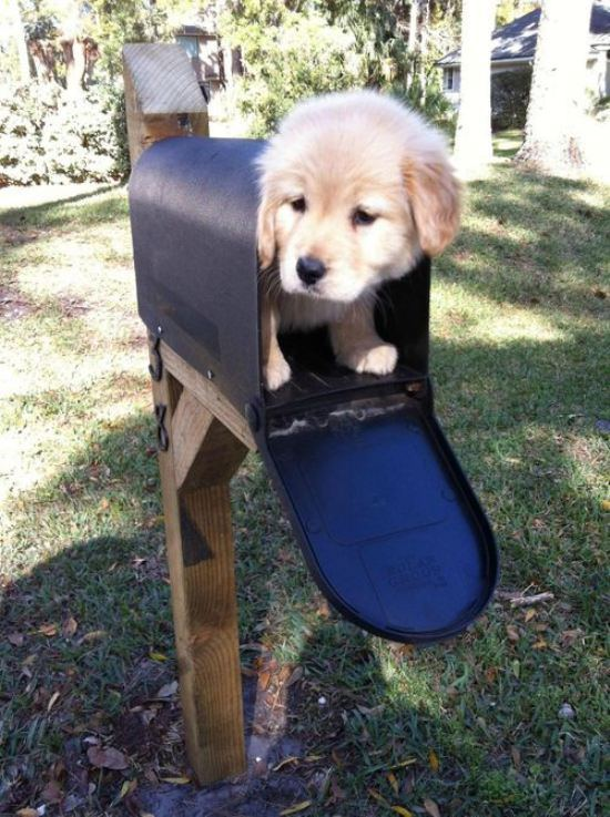 puppy mail