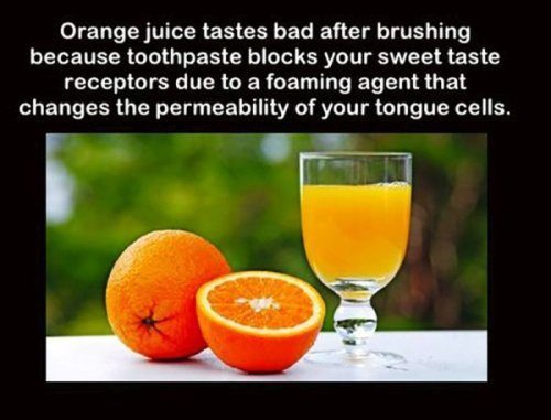 orange juice facts
