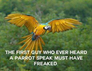first speaking bird