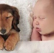 Here Is The Story About Your Hormones And Your Love For Puppies [VIDEO]