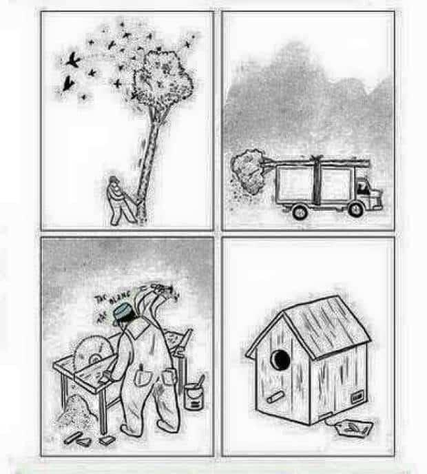 build a home build a dream kill a forrest