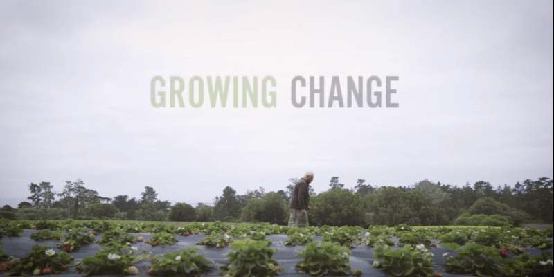 growing change - strawberry