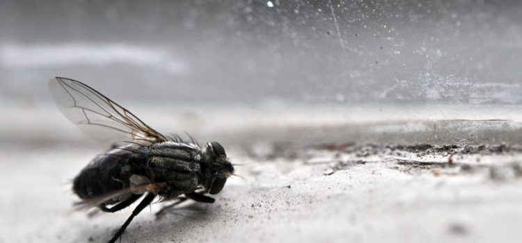 No Flies On You? Think Again!